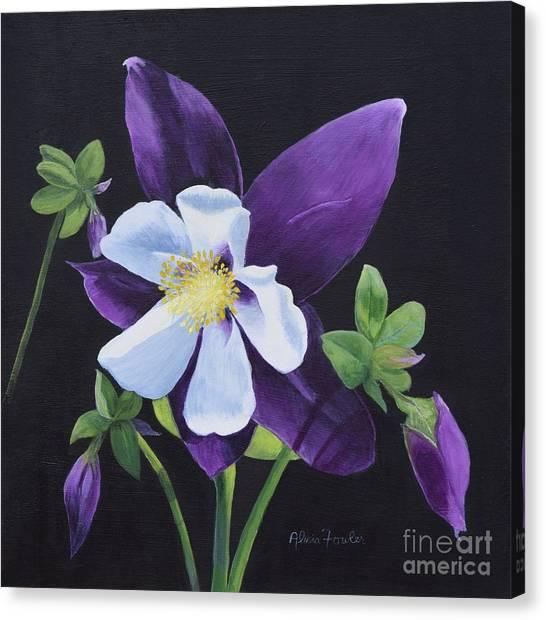 Colorado Blue Columbine Canvas Print
