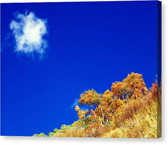 Colorado Blue Canvas Print