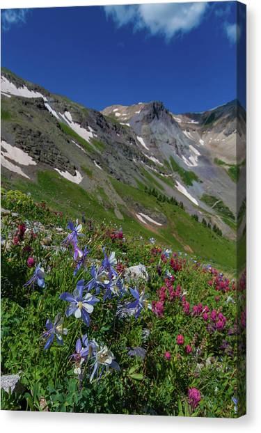 Offroading Canvas Print - Colorado Columbine Adorn The Upper Edges Of The San Juan Mountai by Bridget Calip