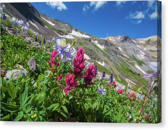 4x4 Canvas Print - Colorado Columbine And Indian Paintbrush Wildflowers On Imogene  by Bridget Calip