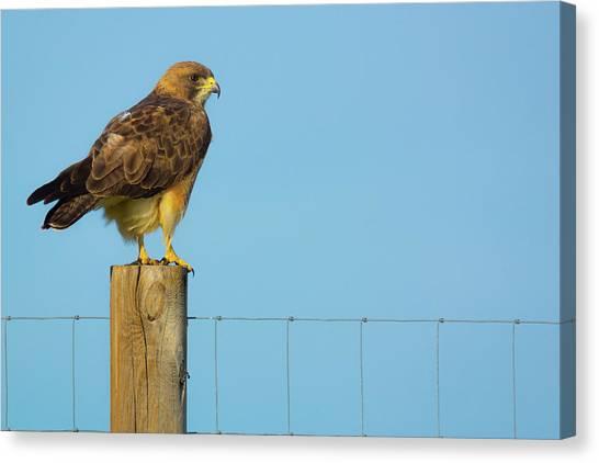 Canvas Print featuring the photograph Colorado Swainson's Hawk Perched by John De Bord