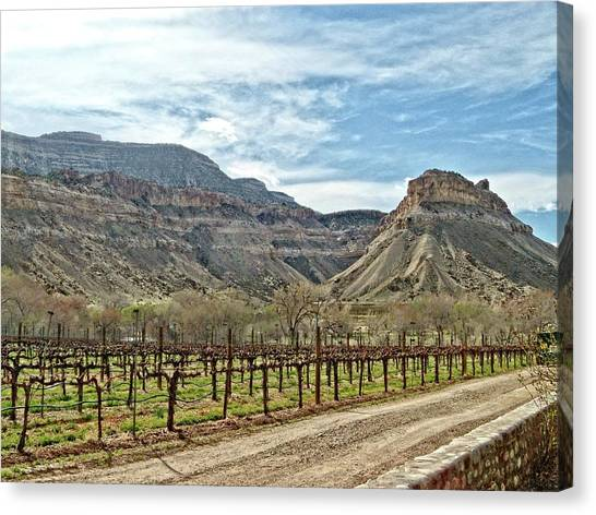 Dirt Road Canvas Print - Colorado Vineyard by Jeremy Tamsen