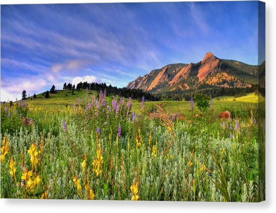 Landscape Canvas Print - Colorado Wildflowers by Scott Mahon