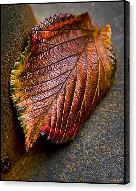 Colorfall Canvas Print by Daniel G Walczyk