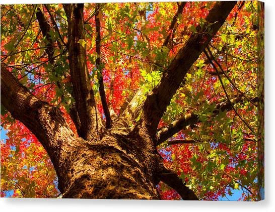 Colorful Autumn Abstract Canvas Print