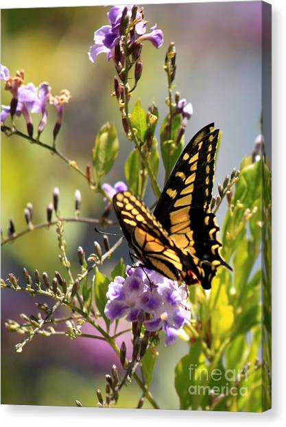 Garden Canvas Print - Colorful Butterfly by Carol Groenen