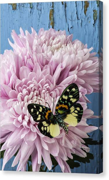 Snowball Canvas Print - Colorful Butterfly On Pink Mum by Garry Gay