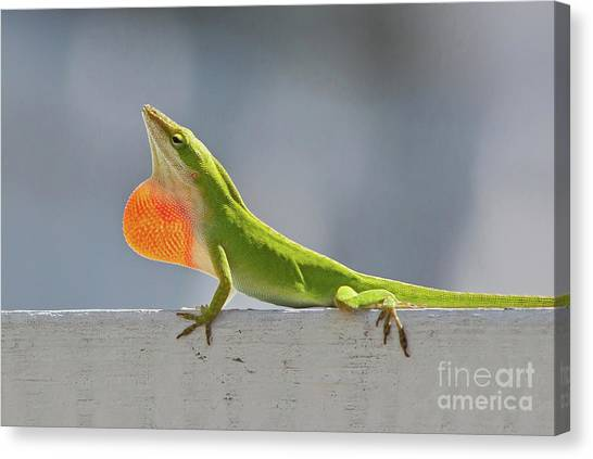 Colorful Carolina Anole Lizard Canvas Print
