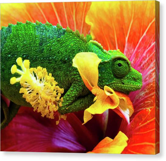 Green Camo Canvas Print - Colorful Chameleon by Christopher Johnson