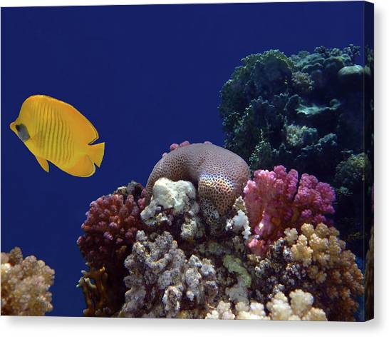 Colorful Coralreef Canvas Print