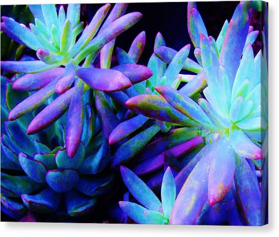 Colorful Dancing Succulents Canvas Print