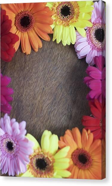 Colorful Gerbera Daisies In A Circle Canvas Print