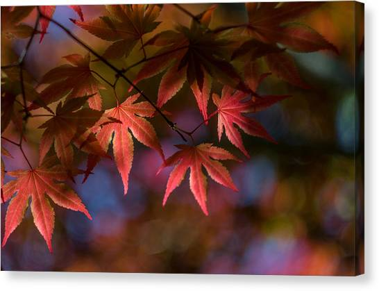 Colorful Japanese Maple Canvas Print