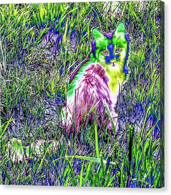 Colorful Kitty Canvas Print