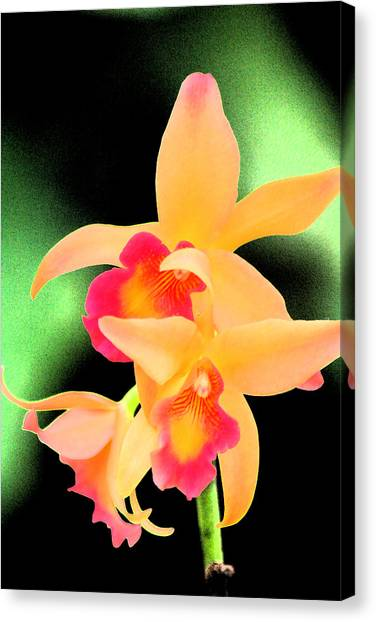 Colorful Orchid Canvas Print by Nanette Hert