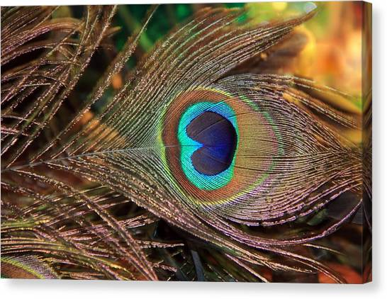 Colorful Peacock Feather Canvas Print