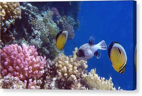 Colorful Red Sea Fish And Corals Canvas Print
