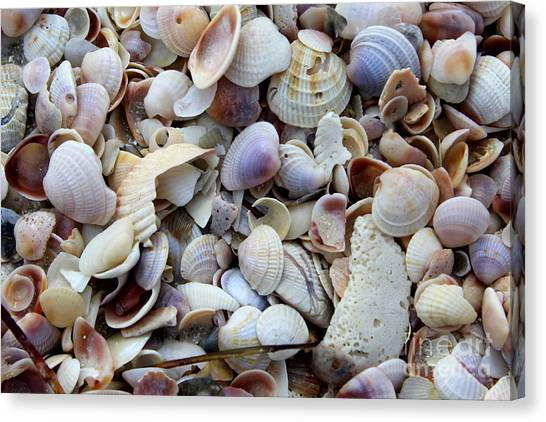Colorful Shells Canvas Print