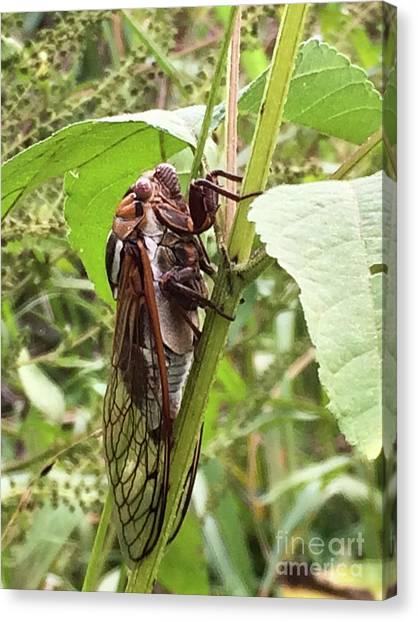 Colorful Summer Cicada Canvas Print