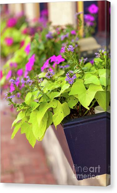 Colorful Summer Flowers In Window Box Canvas Print