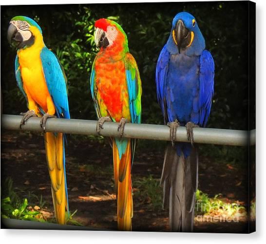 Colorful Trio Canvas Print