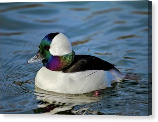 Colorful Waterfowl Canvas Print