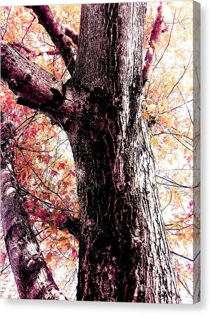 Colors And Texture  Canvas Print