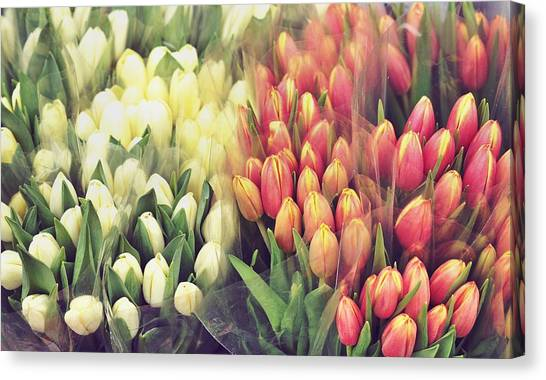 Colors In Gauze Canvas Print by JAMART Photography