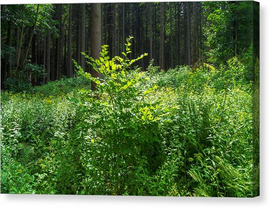 Colors Of A Forest In Vogelsberg Canvas Print