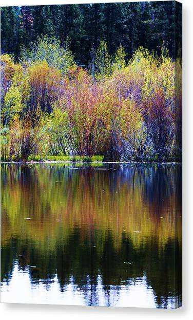 Colors Of Autumn In May Canvas Print by Russell  Barton