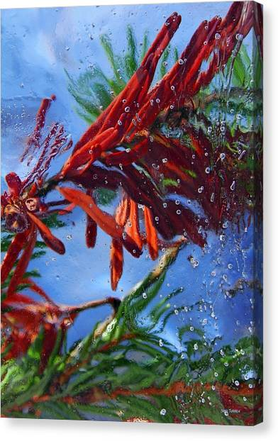 Canvas Print featuring the photograph Colors Of Nature by Sami Tiainen