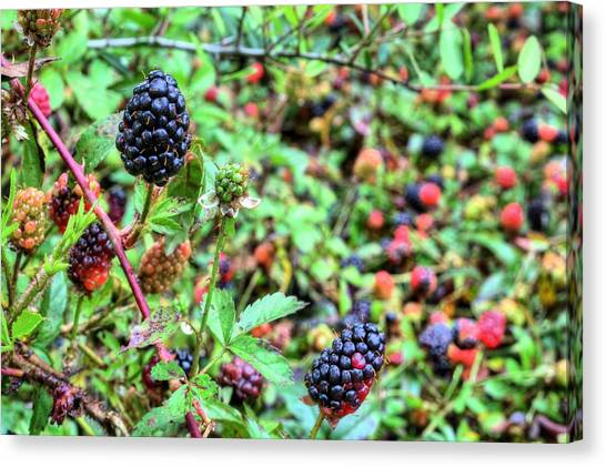 Wild Berries Canvas Print - Colors Of Spring by JC Findley