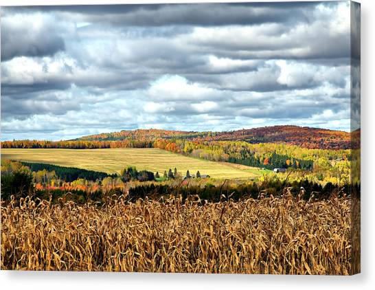 Colors Of The Field Canvas Print