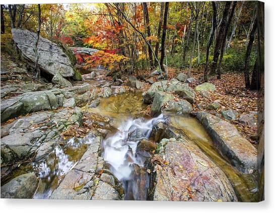 Colour Of Autumn Canvas Print