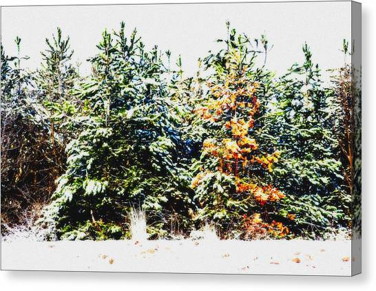Coloured Trees  Canvas Print