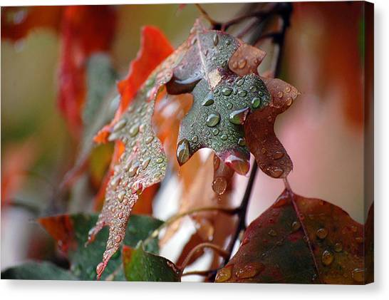 Colours Of Fall I Canvas Print