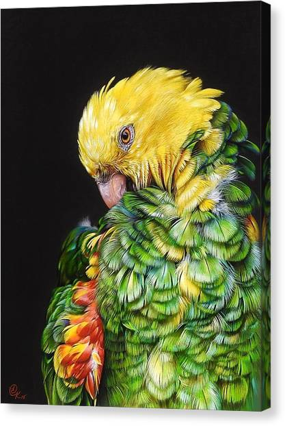 Colours Of The Jungle - Yellow-headed Amazon Canvas Print