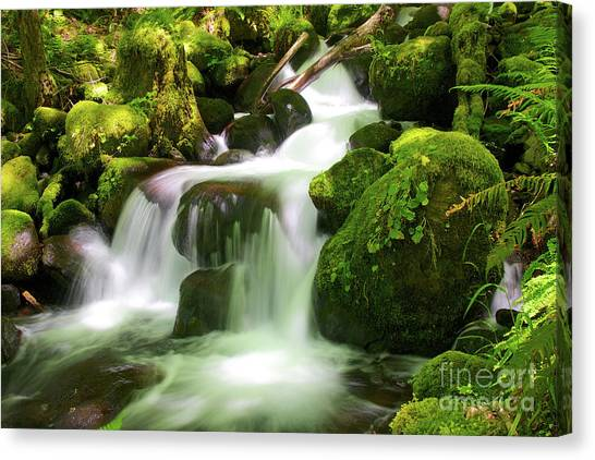 Columbia Gorge Stream Canvas Print