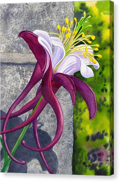Columbine Canvas Print by Catherine G McElroy