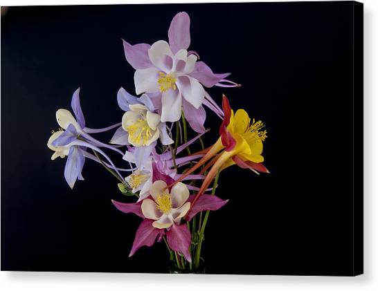 Canvas Print featuring the photograph Columbine Medley by Gary Lengyel