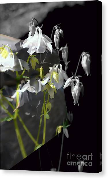 Columbine Shades Of Grey Canvas Print