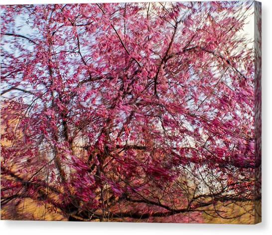 Columnar Sargent Cherry 1 Canvas Print