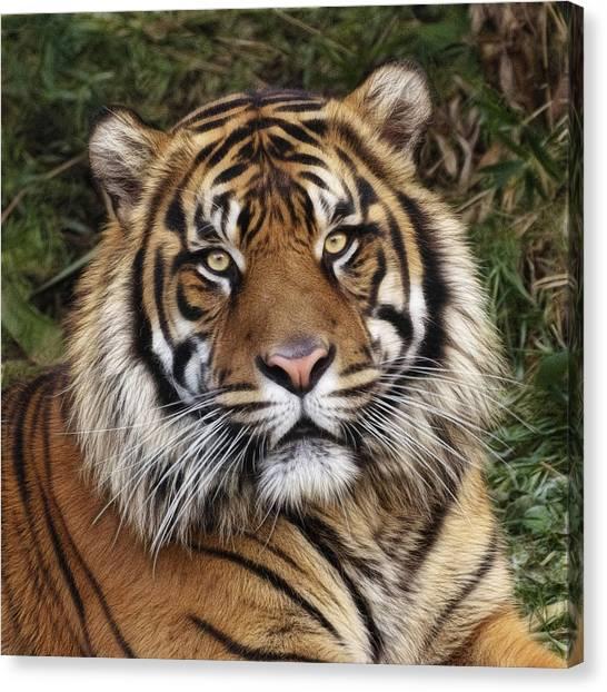 Come Pet Me Canvas Print