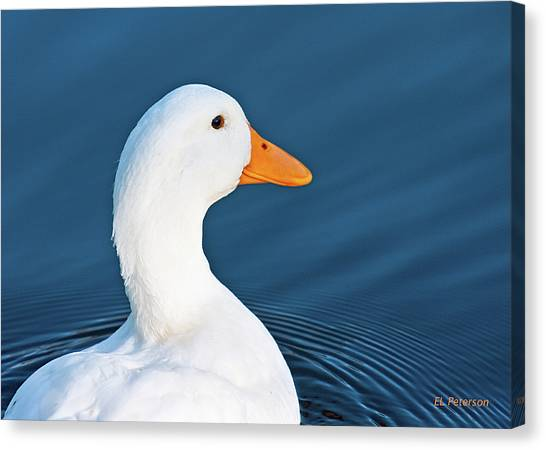 Come Swim With Me Canvas Print