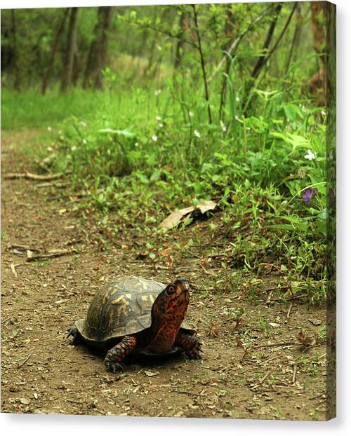 Coming Out Of My Shell. Canvas Print