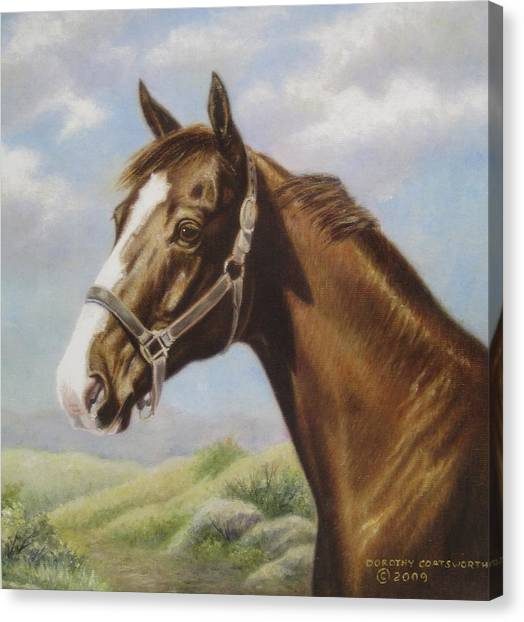 Commission Chestnut Horse Canvas Print by Dorothy Coatsworth