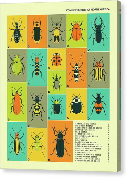 Bugs Canvas Print - Common Beetles Of North America by Jazzberry Blue