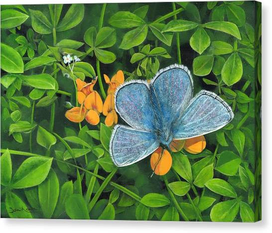 Common Blue On Bird's-foot Trefoil Canvas Print