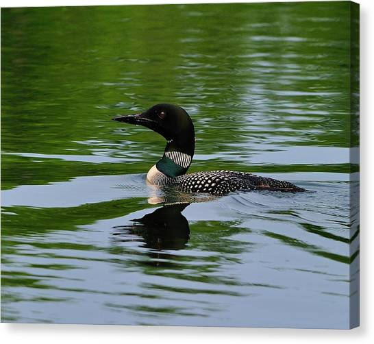 Common Loon Canvas Print