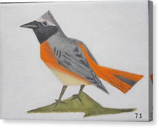 Common Redstart Canvas Print
